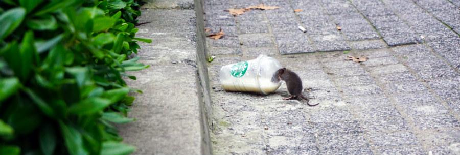 como ahuyentar ratas y ratones